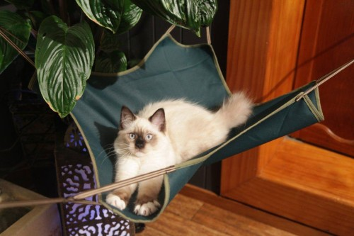 houndhouse cat hammock sling   buy online at the nile  rh   thenile co nz